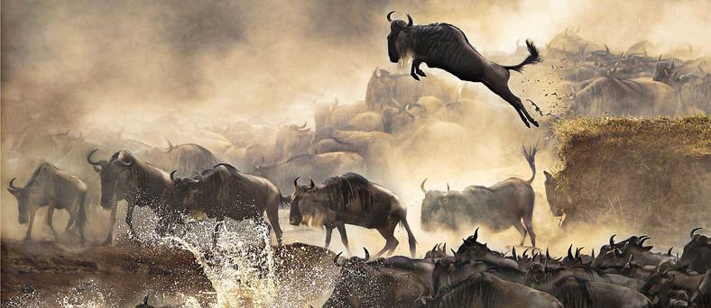 How to witness the Wildebeest migration in Africa