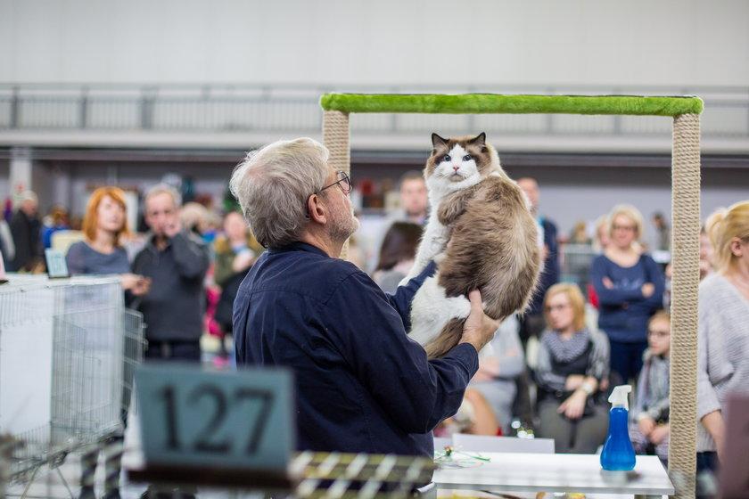 Najpiękniejsze koty na poznańskich targach