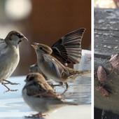 SMRDIBUBE UMESTO DŽIVDŽANA Kako su ogavni insekti smenili MASKOTU BEOGRADA