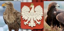 Jaki ptak jest w godle Polski? To nie orzeł