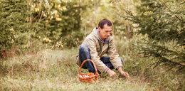 Jak przygotować się na wyprawę do lasu? Poradnik grzybiarza
