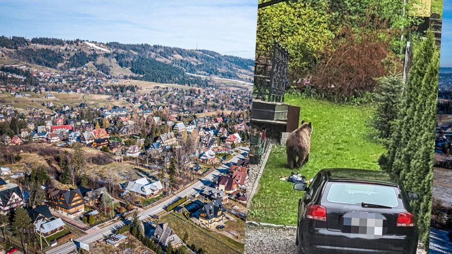 Na jednym z osiedli w Zakopanem pojawił się niedźwiedź