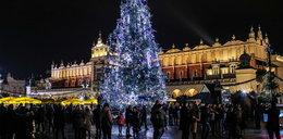 Już jest! Na Rynku Głównym w Krakowie rozbłysła choinka