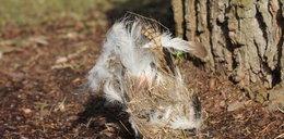 Się dzieje! Zoo czyści budki lęgowe ptaków