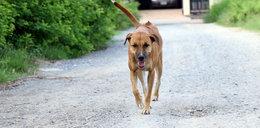 Urzędnik zniszczył budy dla bezdomnych psów? Mamy jego odpowiedź