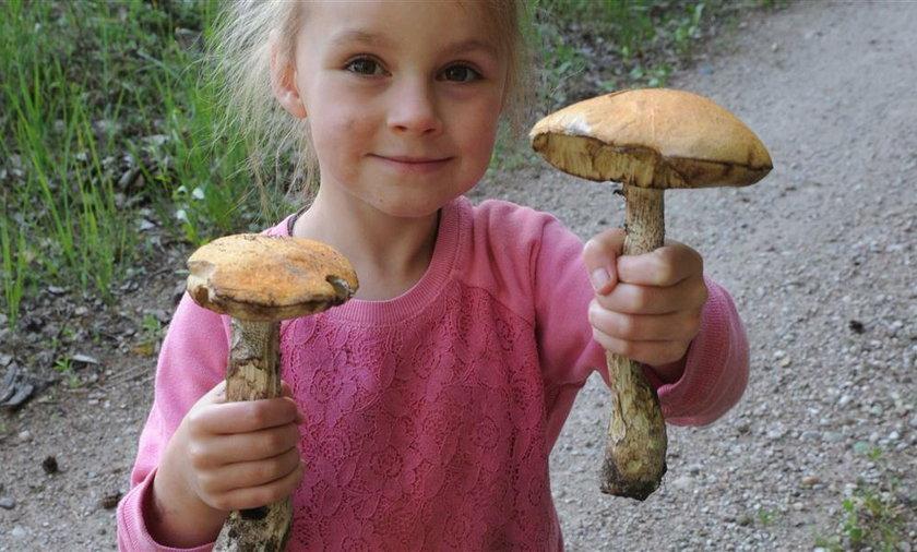 Mała Kinga zamiast jagód do domu przyniosła grzyby