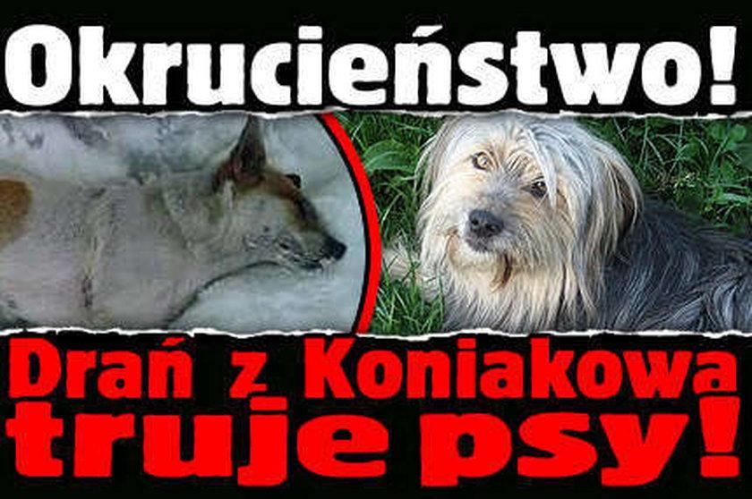 Drań z Koniakowa truje psy