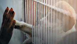 W Słupsku powstanie schronisko dla zwierząt