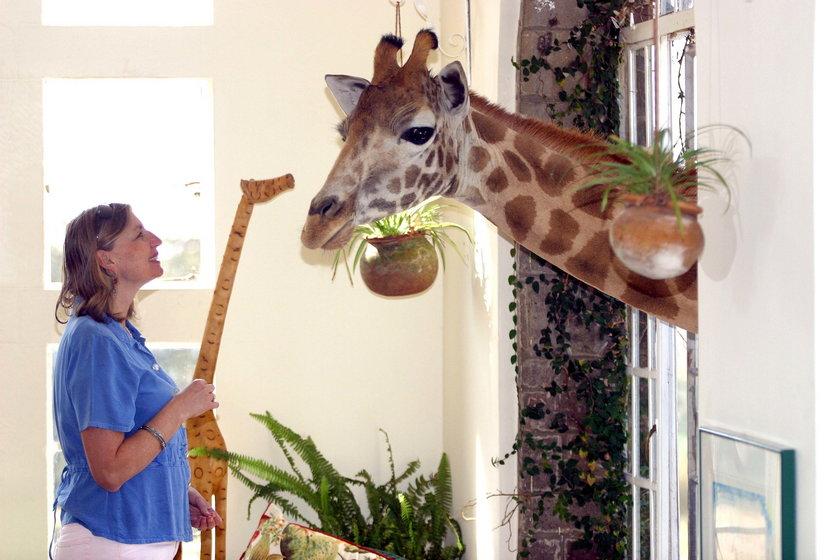 Najdziwniejsze hotele na świecie - Giraffe Manor