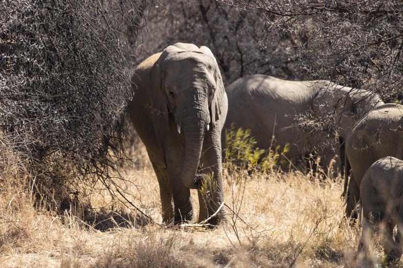 Słonie w rezerwacie