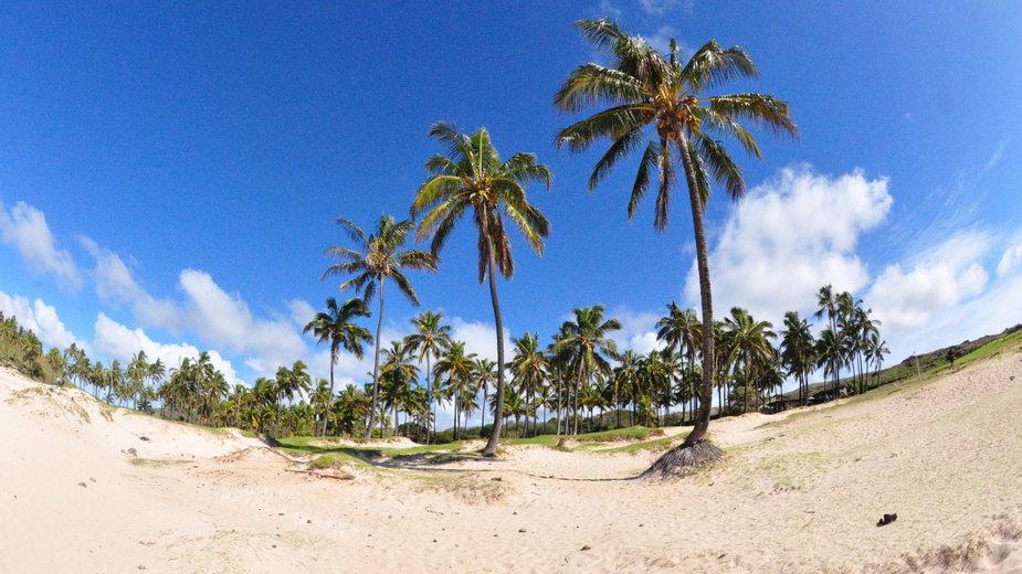 Anakena - najpiękniejsza plaża świata