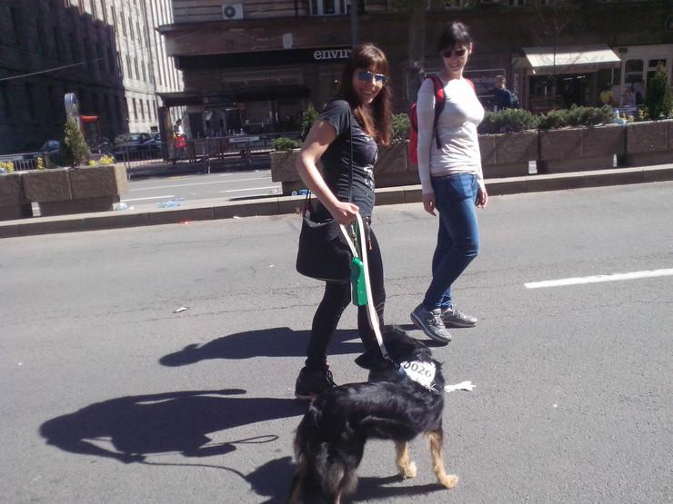 Šetnja odgovornih vlasnika pasa na maratonu