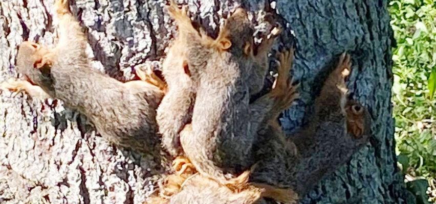 Nie uwierzysz, co zrobiły te wiewiórki! Potrzebowały pomocy policji