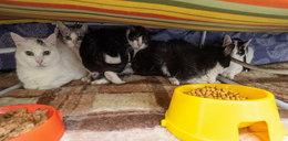 Ich właścicielka zmarła. Przygarnijcie kotki pani Krysi!