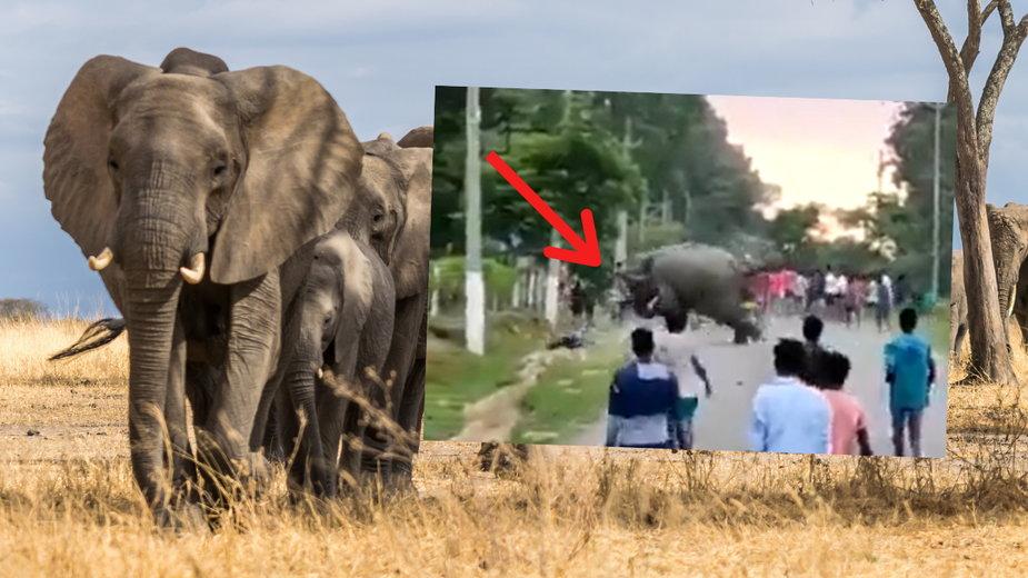 Słoń zadeptał na śmierć chłopca w Indiach
