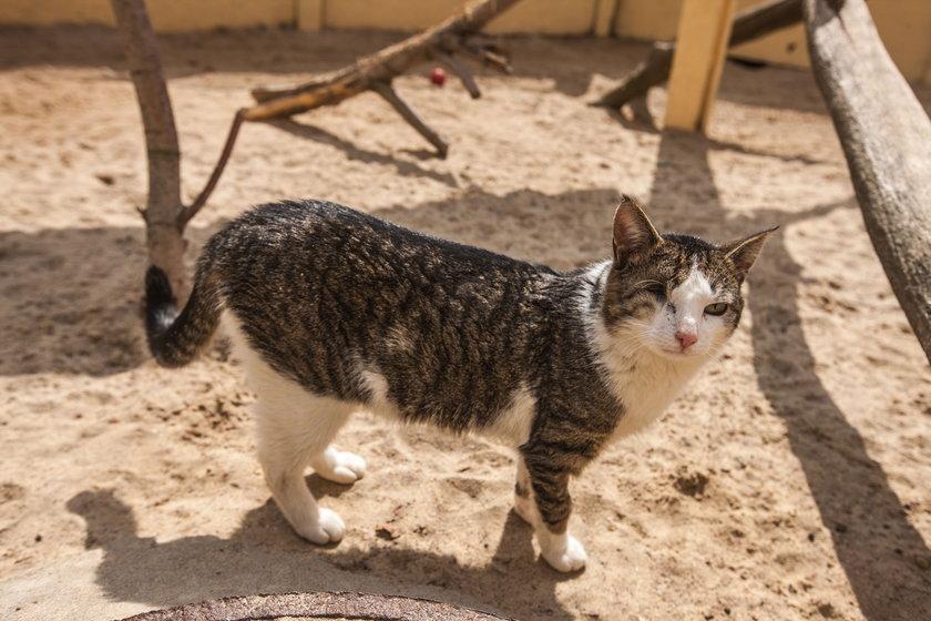 Miasto wyda 100 tys. zł na sterylizację i kastrację kotów