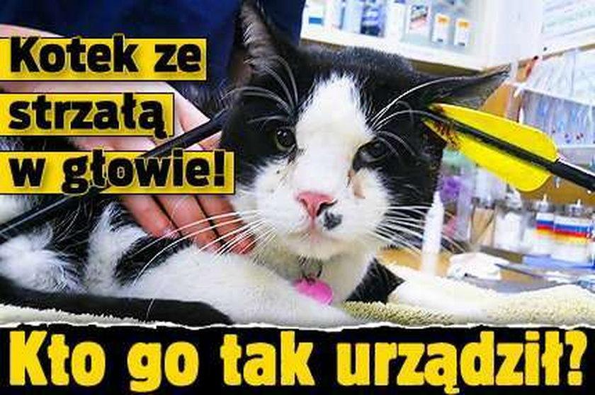 Kotek ze strzałą w głowie! Kto go tak urządził?