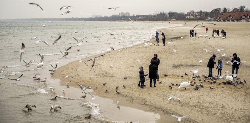 Mieszkańcy Sopotu boją się ptasiej grypy. Trafili do strefy zagrożenia!