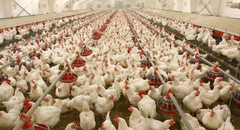 Niger records outbreak of avian flu.