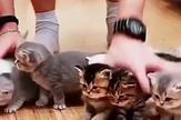 Mačići fotografija životinje ljubimci prtscn Facebook