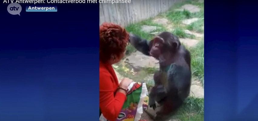 Kobieta romansowała z szympansem? Nie wszystkim się to spodobało