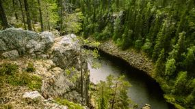 Dziewiczy las, w którym zapisana jest historia Finlandii