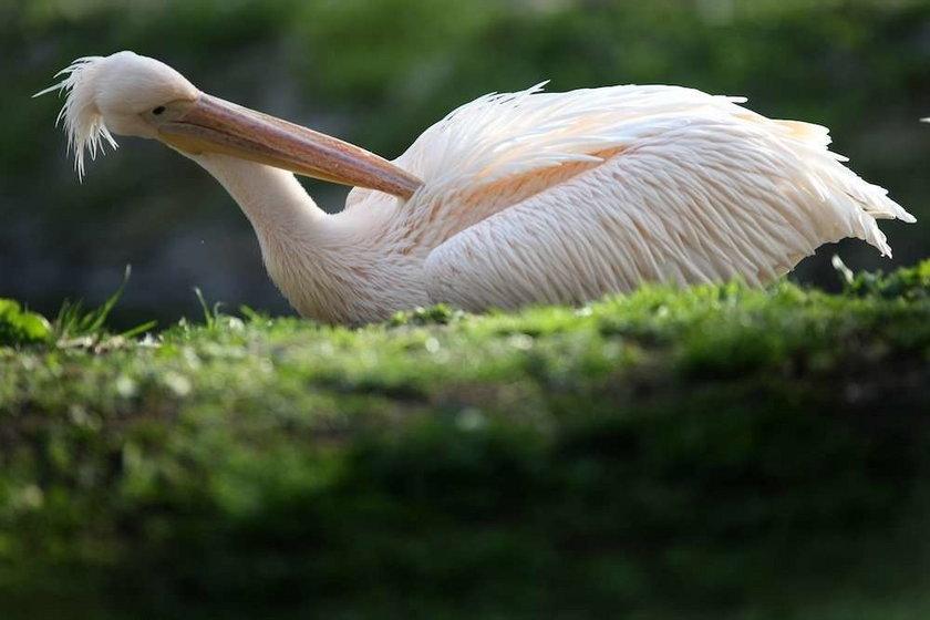 ptak,zoo, warszawski ogród zoologiczny