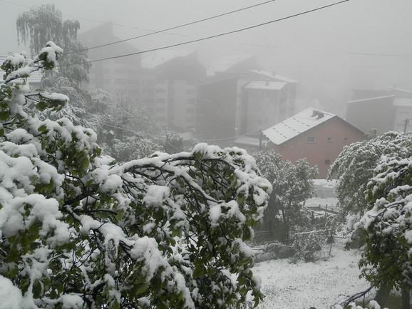 Pod težinom majskog snega savila se stabla