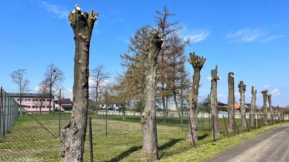 Zniszczone drzewa w Łubnicach. Zostały same pnie
