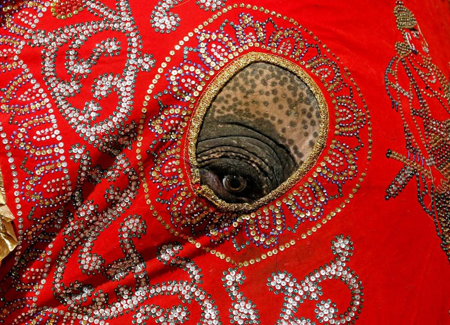 An elephant decorated with a cloth walk during the annual Nawam Perahera (street pageant) in Colombo