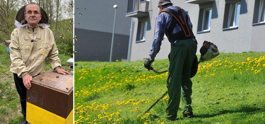 Pszczelarze są przerażeni. Wszystko przez kosiarzy