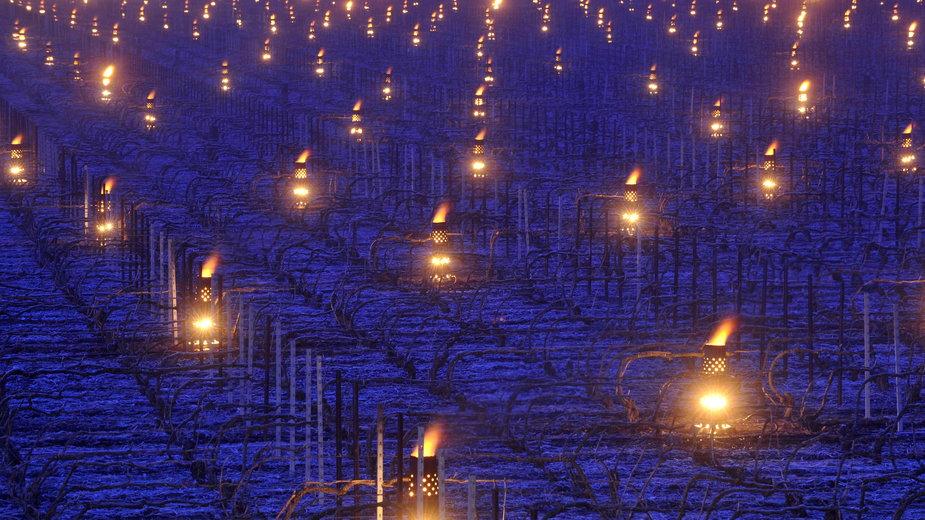 Francuscy winiarze rozpalają świece, by uchronić swoje zbiory przed mrozem