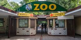 Ewa Zgrabczyńska nową dyrektor poznańskiego zoo