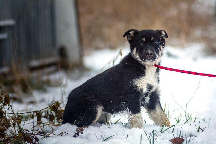 Mnóstwo psiaków znalazło nowy dom dzięki czytelnikom Faktu