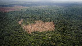 Do roku 2050 znikną lasy deszczowe o powierzchni Indii