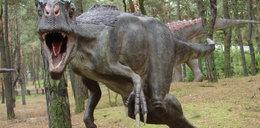 Dinozaury z Ostrowca podbijają świat!
