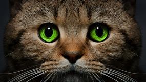 Kocur paranormalny - niesamowite zdolności kotów