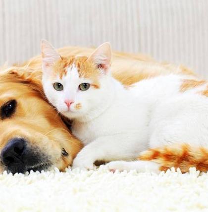 Das ist das perfekte Haustier für Sie – laut Ihrem Sternzeichen