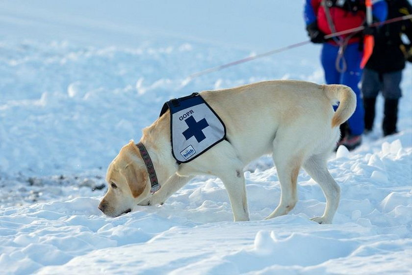 Labrador nazywa się Frodo. Ma 15 lat. Od czterech lat już nie pracuje, ale brał udział w 50 akcjach.
