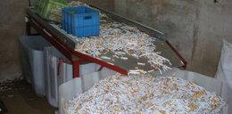 Miliony lewych papierosów i tony tytoniu warte fortunę
