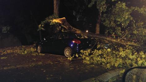 Drvo palo na auto u Rakovici