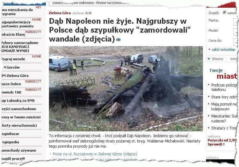 Wandale zniszczyli słynne drzewo-pomnik