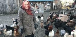 Dramat mieszkańców Bobrówki: lis morduje nam kury!