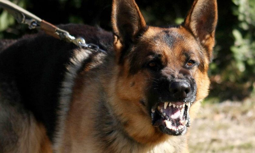 Psy odgryzły dziewczynce nos i część twarzy