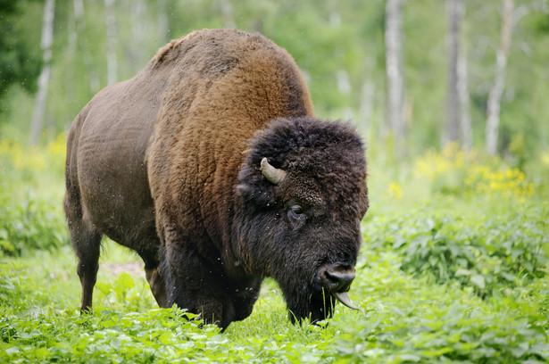 Na terenie parków narodowych oraz rezerwatów przyrody zabroniona jest budowa lub rozbudowa obiektów budowlanych i urządzeń technicznych