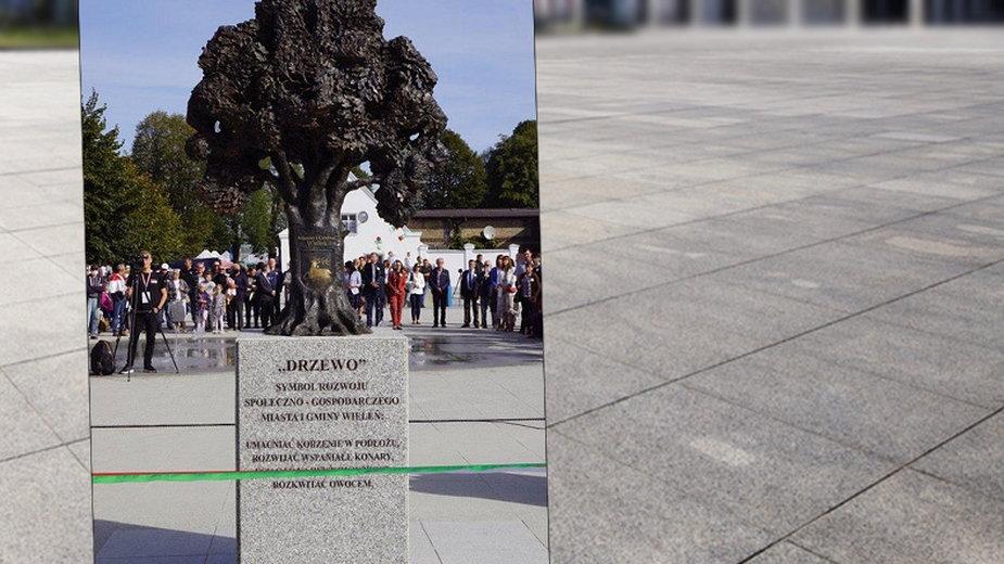Na zabetonowanym placu w Wieleniu stoi pomnik drzewa (Fot. UM Wieleń)