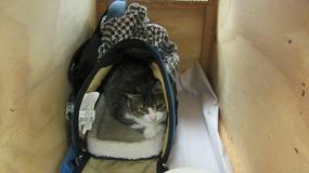 Przemyciła kota do Nowej Zelandii, bo nie wyobraża sobie bez niego udanych wakacji