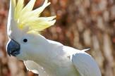 Kakadu wiki