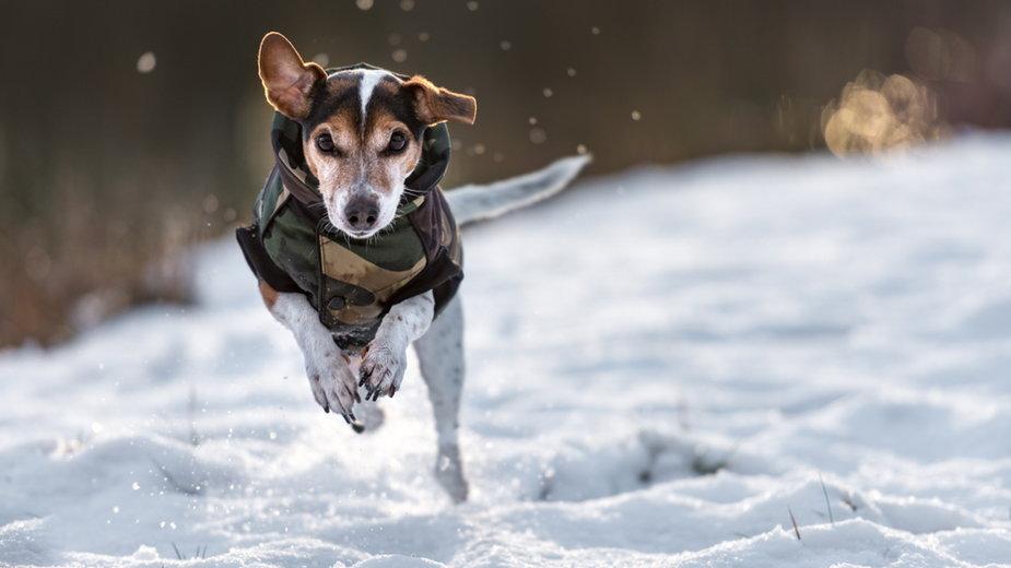 Pies na zimowym spacerze (zdj. ilustracyjne)