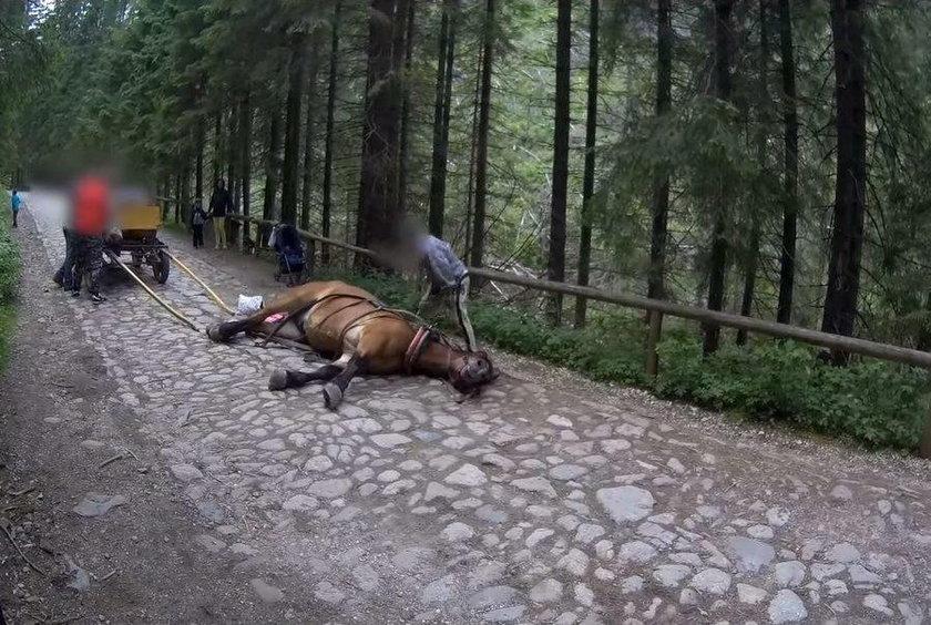 Wycieńczony koń padł w Dolinie Chochołowskiej